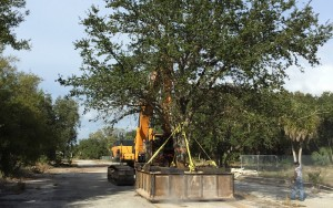 Tree Mitigation, City of Tampa