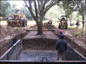 tree-transplanting-pic